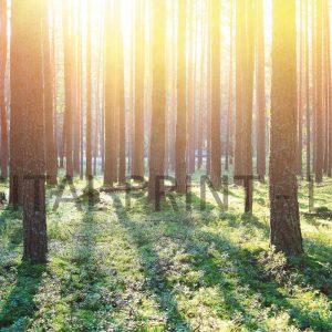 Glas Motiv Wald im Sonnenlicht 2