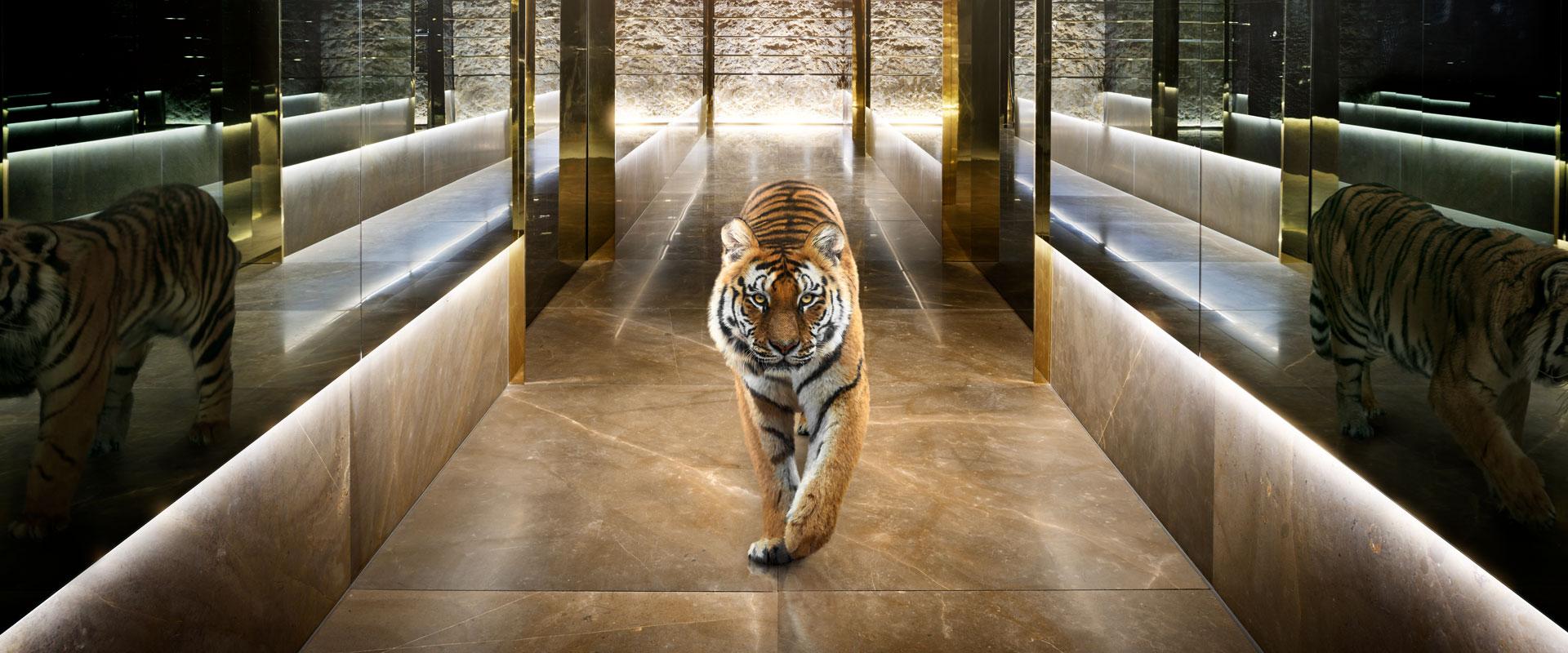 t_11_19543_tiger