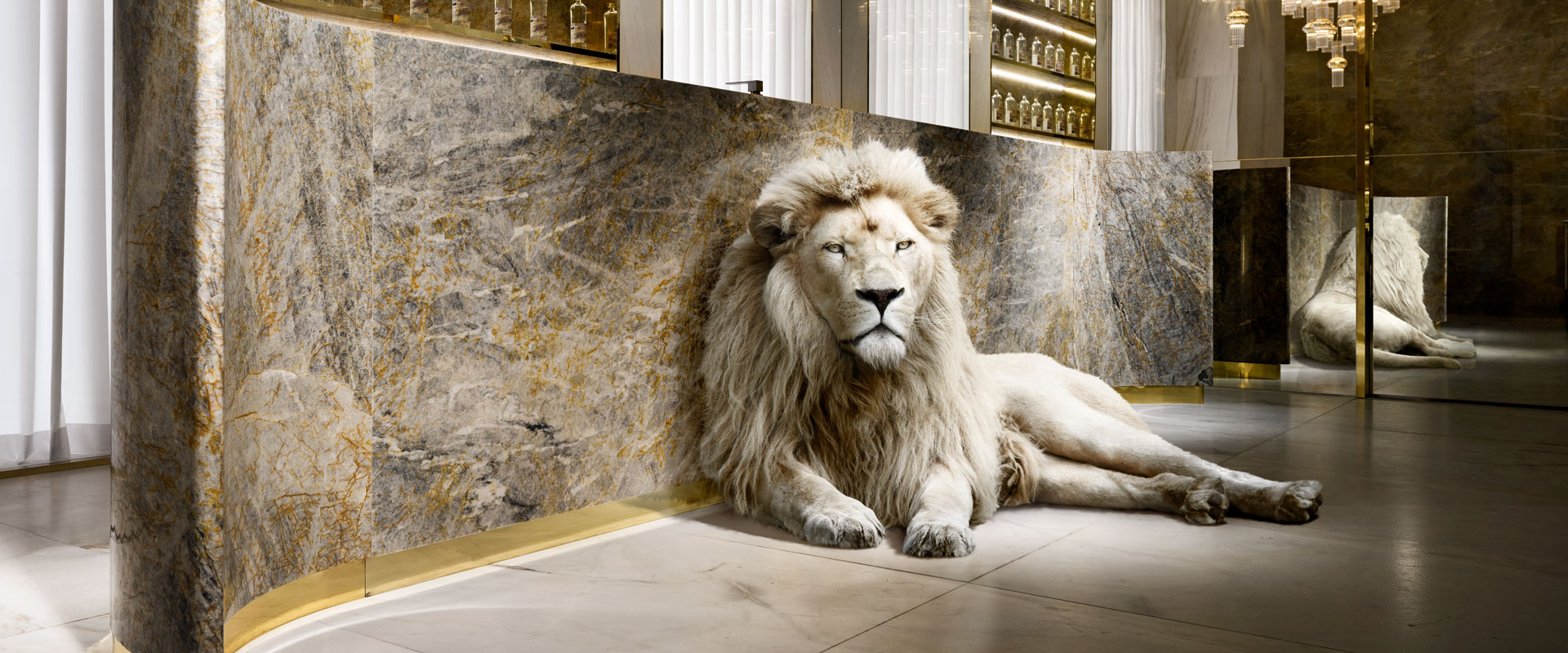 u01_22566_lion